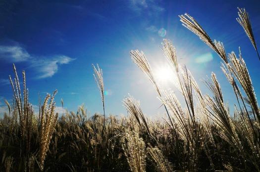 reed by yunjeong, CC0 via Pixabay