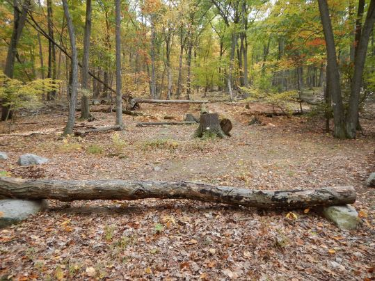 Manitoga Woodland Gardens in Garrison, NY. This large log-lined circle in the middle of a clearing is the perfect place to sit and take a break.
