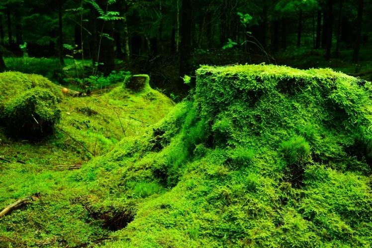 forest-483206.jpg