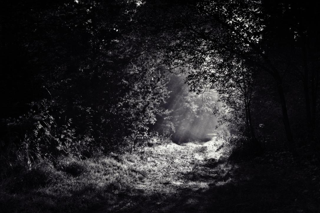 woods-690415