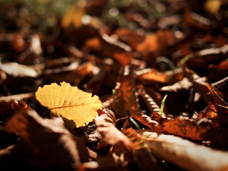 autumn-1031609