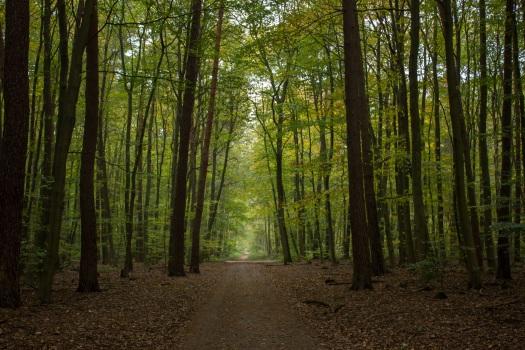 autumn-1784142