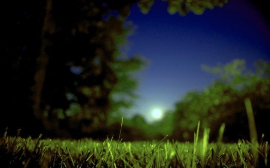moon-50233